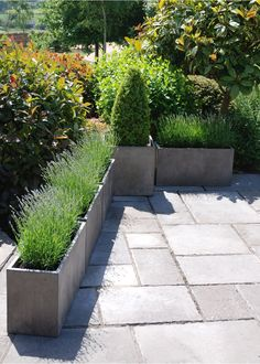 Rectangle 800 with Cube planter