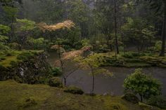 Saiho-Ji Garden in the Rain (雨の西芳寺 庭園) by Kotomi Ito on 500px