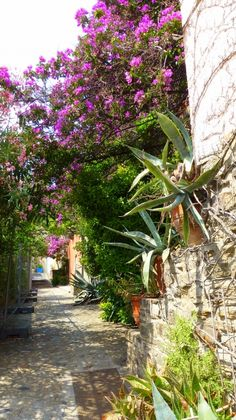 Collioure, Languedoc-Roussillon
