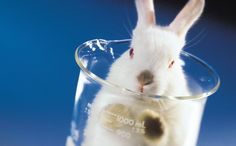 Horrifying Lab Tests on Rabbits Going Up, Not Down, in the U.K.