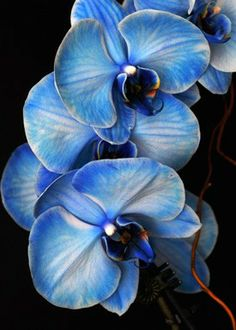 blue mystique orchid What does this orchid have to do with your business? As a business owner, you need to be able to think outside of the box.
