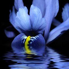 Pin jest o sztuce macrofotografii przyrodniczej