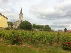 Aloxe-Corton (Côte d'Or) L église