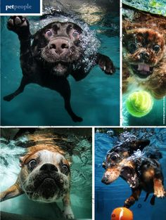 Get your paws wet in this fetch! magazine interview with pet photographer Seth Casteel