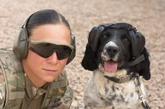 Military working dogs have their own Personal Protective Equipment (PPE) to protect them from their surroundings. 1st Military Working Dog regiment: http://www.army.mod.uk/medical-services/veterinary/30499.aspx