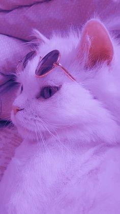 Wallpaper Gatos, Iphone Wallpaper Cat, Funny Cat Wallpaper, Cute Panda Wallpaper, Animal Wallpaper, Cute Cartoon Wallpapers, Cute Kawaii Animals, Cute Little Animals, Cute Baby Cats