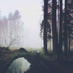 Image via We Heart It https://weheartit.com/entry/168840858/via/328730 #alternative #art #background #beautiful #beauty #Dream #fog #forest #grunge #hiking #hipster #landscape #life #love #nature #pale #photography #place #scenic #travel #trees #vintage #wallpaper #wanderlust #wish #woods #darknature #instagram