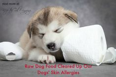 Raw Dog Food Cleared Up Our Dogs' Skin Allergies - A to Z Blogging Challenge