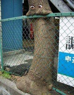 Tree eats fence. sTREEt art
