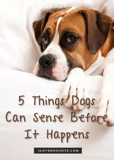 5 Amazing Things Dogs Can Sense Before It Happens http://theilovedogssite.com/are-dogs-psychic-5-things-dogs-sense-before-they-happen/?src=PIN_RCH_DogsCanSense_2-9-14&utm_content=buffer01971&utm_medium=social&utm_source=pinterest.com&utm_campaign=buffer