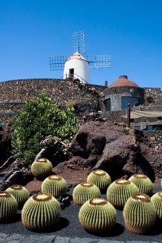Cactus garden last work of local artist Cesar Manrique