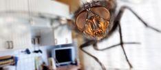 les 25 meilleures id es de la cat gorie repousser les mouches sur pinterest plantes anti. Black Bedroom Furniture Sets. Home Design Ideas