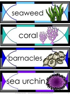OCEAN word wall cards! Free Ocean Printables - The Ocean for Kinder Kids FREEBIE contains a Find the Sight Word Manatee Activity, a Scrambled Ocean Sentence Activity, an Under the Sea Adding Activity, and 8 illustrated OCEAN Word Wall cards.