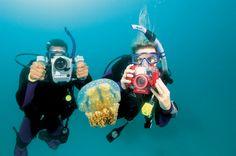 FOTOGRAFIA DIGITAL.  Aprende a capturar imágenes para compartirlas con tus amigos y familiares. Es una forma estupenda de volver a vivir las aventuras que has tenido.  La fotografía subacuática es una de las especialidades de buceo más populares, y el alza de la fotografía digital subacuática lo ha convertido en más sencillo y divertido que nunca.  USD $130