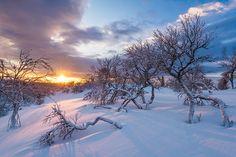 Lövåsen, Grövelsjöfjällen, Dalarna, Sweden