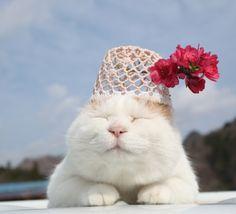 花桃の花 |のせ猫オフィシャルブログ Powered by Ameba