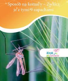 Sposób na komary - Zwalcz je z tymi 9 zapachami  W tym artykule opisaliśmy pachnący sposób na komary - poznaj 9 aromatów, które pomogą Ci odstraszyć te natrętne owady i ochronią przed ich ugryzieniami. Health, Movie Posters, Diy, Health Care, Bricolage, Film Poster, Do It Yourself, Homemade, Billboard