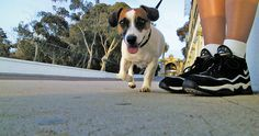 Dog Friendly Parks and Beaches in San Diego Article. #pets #sandiego #dogparks