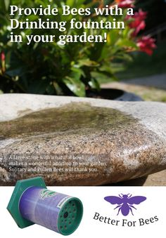 Solitary, Mason and Pollen Bees need water and exposed earth to make the mud that they use to build their nests. There are lots of ways to make sure your garden contains water for bees. A lovely stone with a natural dip will fill with rain water and you can keep it fresh on sunny days, too.