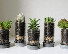 Mason Jar Planters With Drainage Set Of 5 UpCycled by BootsNGus