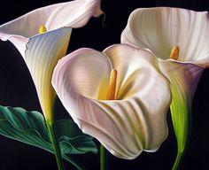 Pinturas Cuadros: Bonitas pinturas con flores cartuchos cuadrosmuybonitos.blogspot.com