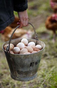 farm fresh eggs ✿⊱╮