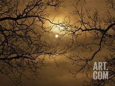 Branches Surrounding Harvest Moon Photographic Print by Robert Llewellyn at Art.com