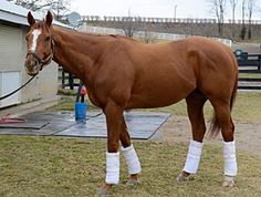Wise Dan, One of the TOP horses in the country!