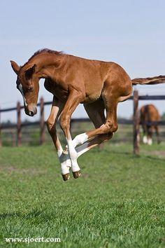 frolicking foal!