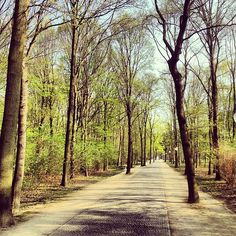 """Tiergarten - the """"central park"""" of berlin.  Lovely for a stroll and some interesting monuments tucked inside."""