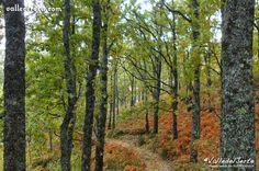Bosques autóctonos del Valle del JerteOtoño en el Valle del Jerte (Cáceres) www.vallecereza.com #viajar #turismo #destino