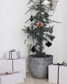 A cute and sustainable Christmas tree idea Sustainable Christmas decor, natural potted Christmas tree, Christmas tree plant, small space Christmas. Minimal Christmas, Simple Christmas, Christmas Home, Minimalist Christmas Tree, Christmas Ideas, Christmas Décor, Scandinavian Christmas Decorations, Christmas Tree Decorations, Christmas Lights