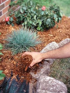 15 earth-friendly ways to kill weeds ... just in time!! | Living the Country Life | http://www.livingthecountrylife.com/gardening/15-earth-friendly-ways-to-kill-weeds/