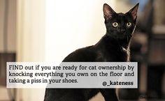 tipsoftheweek_9cats