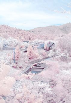 WoW...looks like cotton candy! Yoshino, Nara, Japan