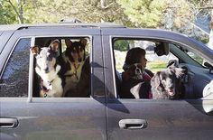 dogs in car--the whole neighbor is riding with us.