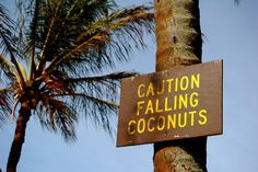 Caution Falling Coconuts: I wish this was my only worry in my life!!