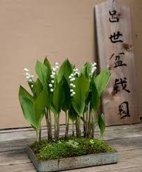 Pildiotsingu samantha sung lily of the valley tulemus