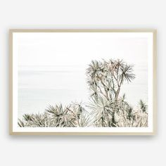 Add an impact on any wall with our Byron Bay Photo wall decor art print. Artwork Prints, Canvas Art Prints, Framed Art Prints, Poster Prints, Cow Photos, Photo Wall Decor, Bird Poster, Beach Artwork, Square Art