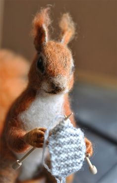 I'm nuts about knitting!
