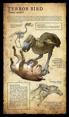 Dodo:Design and Illustration for extinct, prehistoric animal specimens and fossils, natural history museum signage. Prehistoric World, Prehistoric Creatures, Mythological Creatures, Fantasy Creatures, Mythical Creatures, Dinosaur Fossils, Dinosaur Art, Vida Animal, Extinct Animals