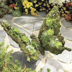 Moss Butterfly Topiary  (expressionscatalog.com)