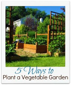 ideas for making a vegetable garden