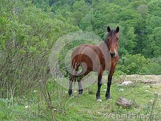 Brown horse in the meadow among green bushes and trees