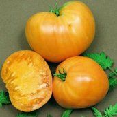 Orange Oxheart Tomato