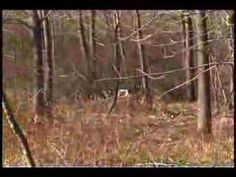 Rabbit Hunting with outdoor Ohio Rabbit Hunting, Ohio, Outdoors, Plants, Columbus Ohio, Plant, Outdoor Rooms, Off Grid, Outdoor