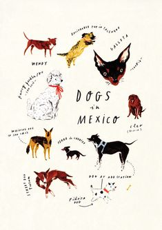 Draw Dogs Nina Cosford Dogs of Mexico - Limited edition giclée print on archival quality paper. Measures x Signed by Nina Cosford. Epic Drawings, Kawaii Drawings, Doodle Drawings, Creature Drawings, Animal Drawings, Dog Illustration, Animal Paintings, Dog Art, Chorizo