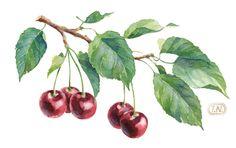 cherry patterns by Natalia Tyulkina, via Behance