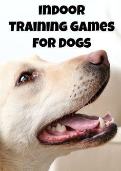 Don't let the rain or snow keep you & Fido locked away! Check out these fun indoor training games for dogs & start playing!
