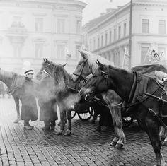 Helsinki, The Past, Horses, Cover, Animals, Historia, Animales, Animaux, Animal